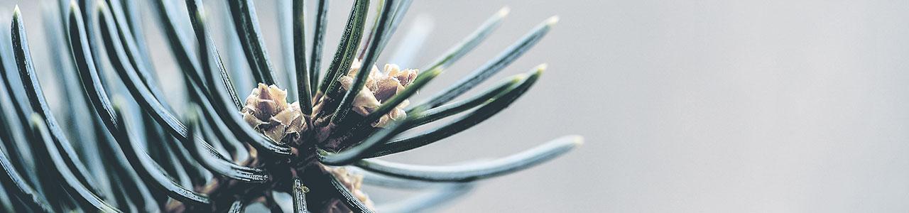 Granulco - granules de bois - résineux
