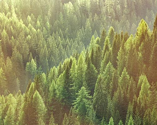 Granulco - granules de bois écologiques