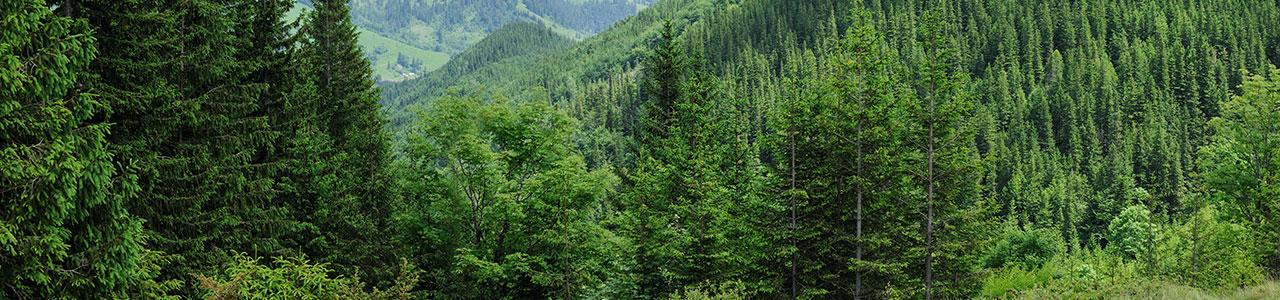 Granulco - Forêt